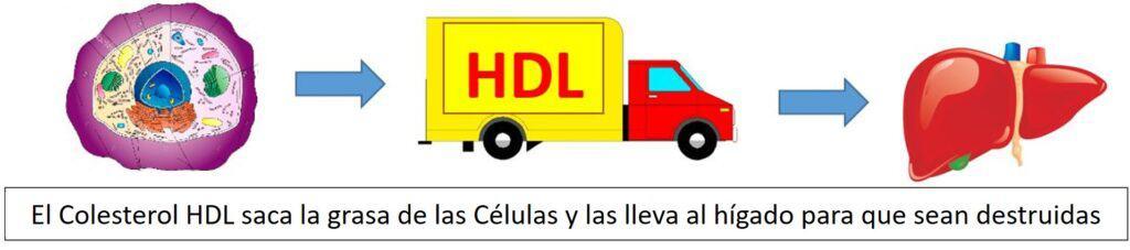 Colesterol Bueno HDL