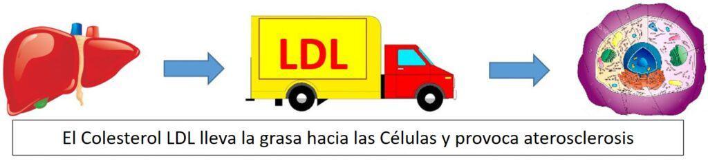 Colesterol Malo LDL